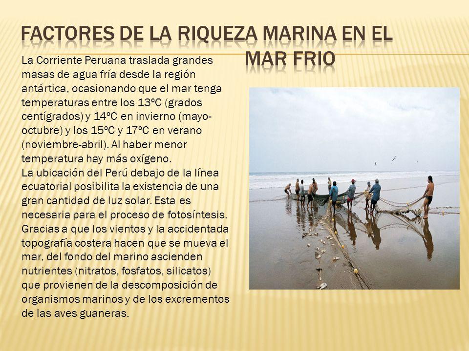 Factores de la riqueza marina en el MAR FRIO