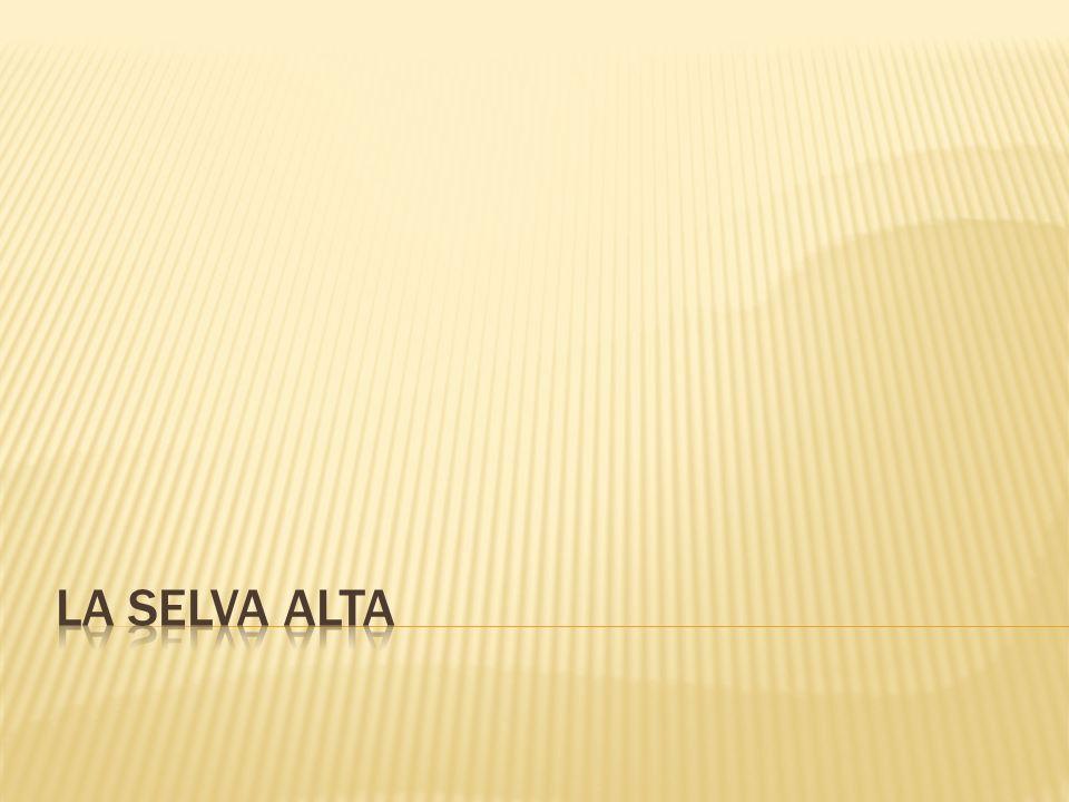 LA SELVA ALTA
