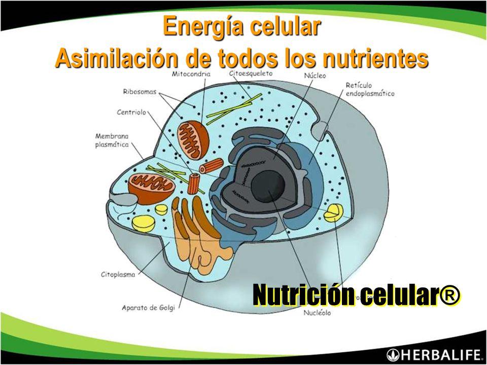 Energía celular Asimilación de todos los nutrientes