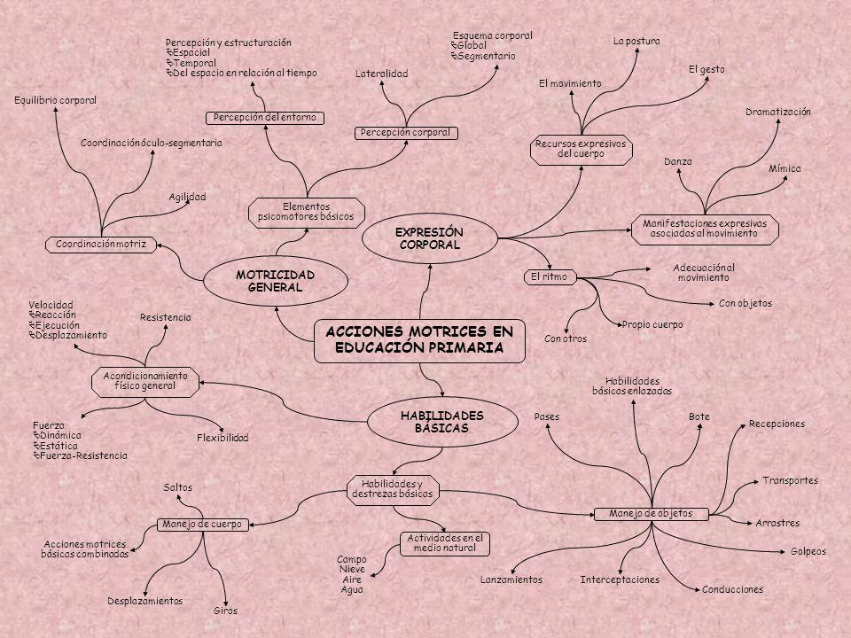 ACCIONES MOTRICES EN EDUCACIÓN PRIMARIA