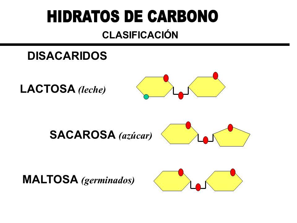 HIDRATOS DE CARBONO DISACARIDOS LACTOSA (leche) SACAROSA (azúcar)