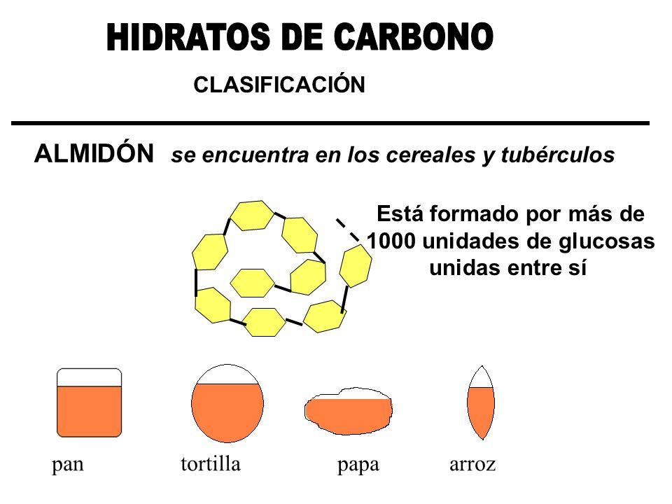 HIDRATOS DE CARBONO ALMIDÓN se encuentra en los cereales y tubérculos