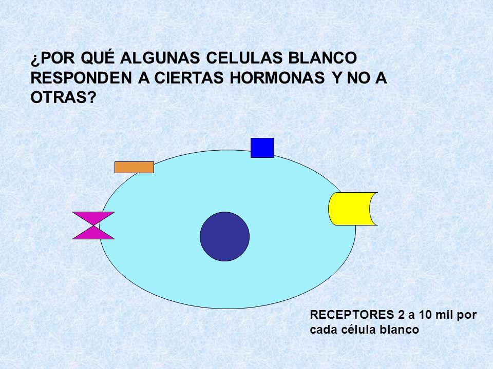 ¿POR QUÉ ALGUNAS CELULAS BLANCO RESPONDEN A CIERTAS HORMONAS Y NO A OTRAS