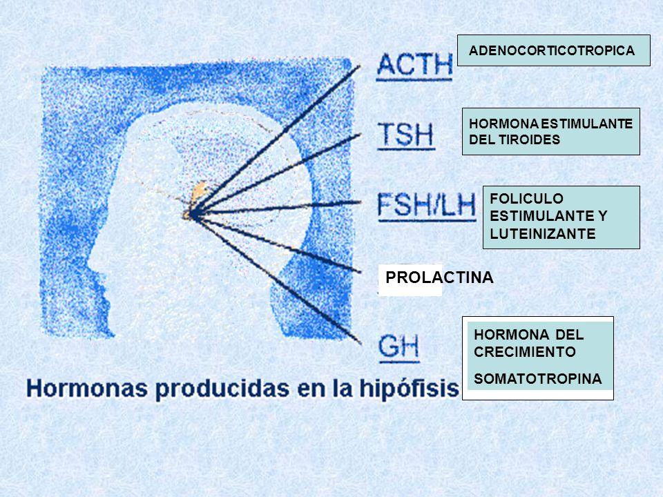 PROLACTINA FOLICULO ESTIMULANTE Y LUTEINIZANTE HORMONA DEL CRECIMIENTO