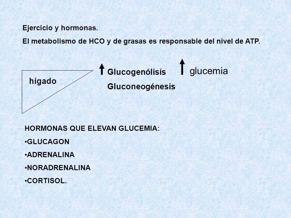 glucemia Glucogenólisis Gluconeogénesis hígado Ejercicio y hormonas.
