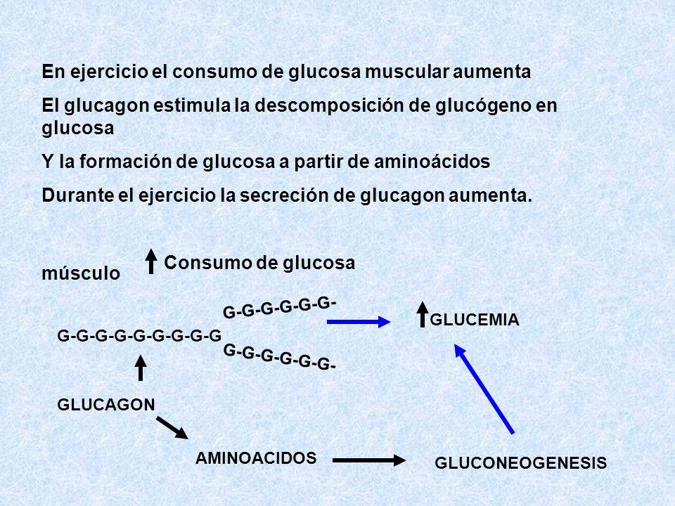 En ejercicio el consumo de glucosa muscular aumenta