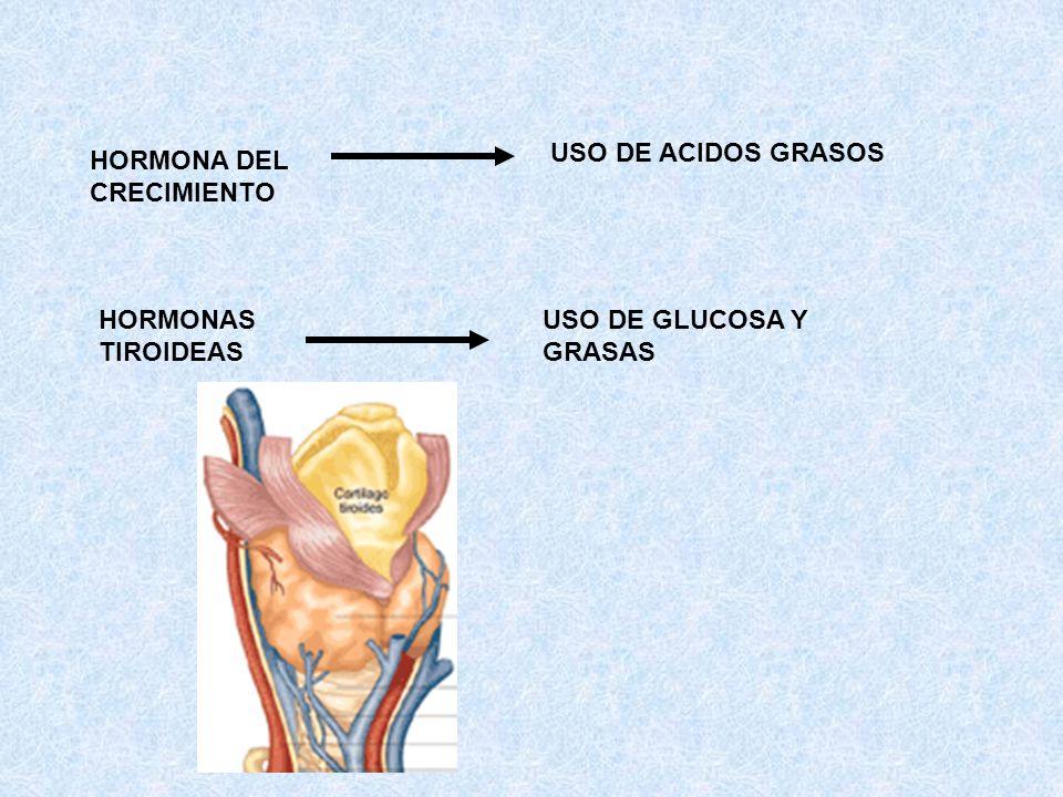USO DE ACIDOS GRASOS HORMONA DEL CRECIMIENTO HORMONAS TIROIDEAS USO DE GLUCOSA Y GRASAS