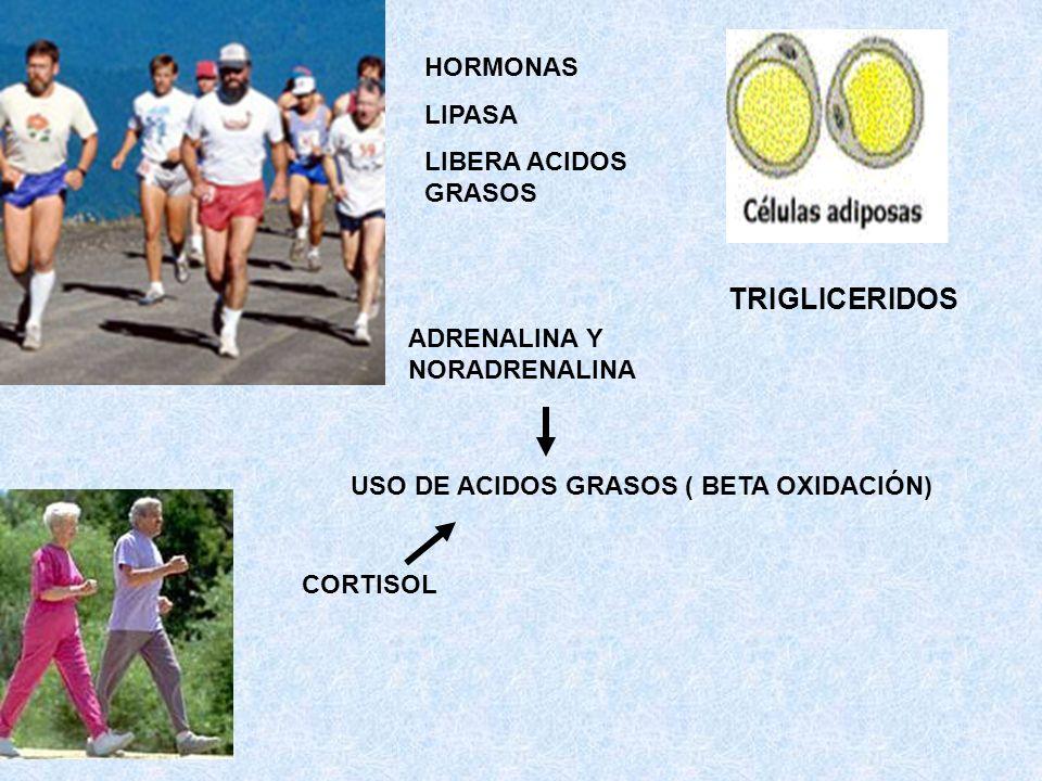TRIGLICERIDOS HORMONAS LIPASA LIBERA ACIDOS GRASOS