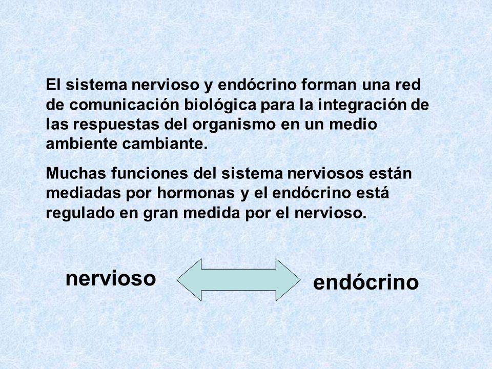 El sistema nervioso y endócrino forman una red de comunicación biológica para la integración de las respuestas del organismo en un medio ambiente cambiante.