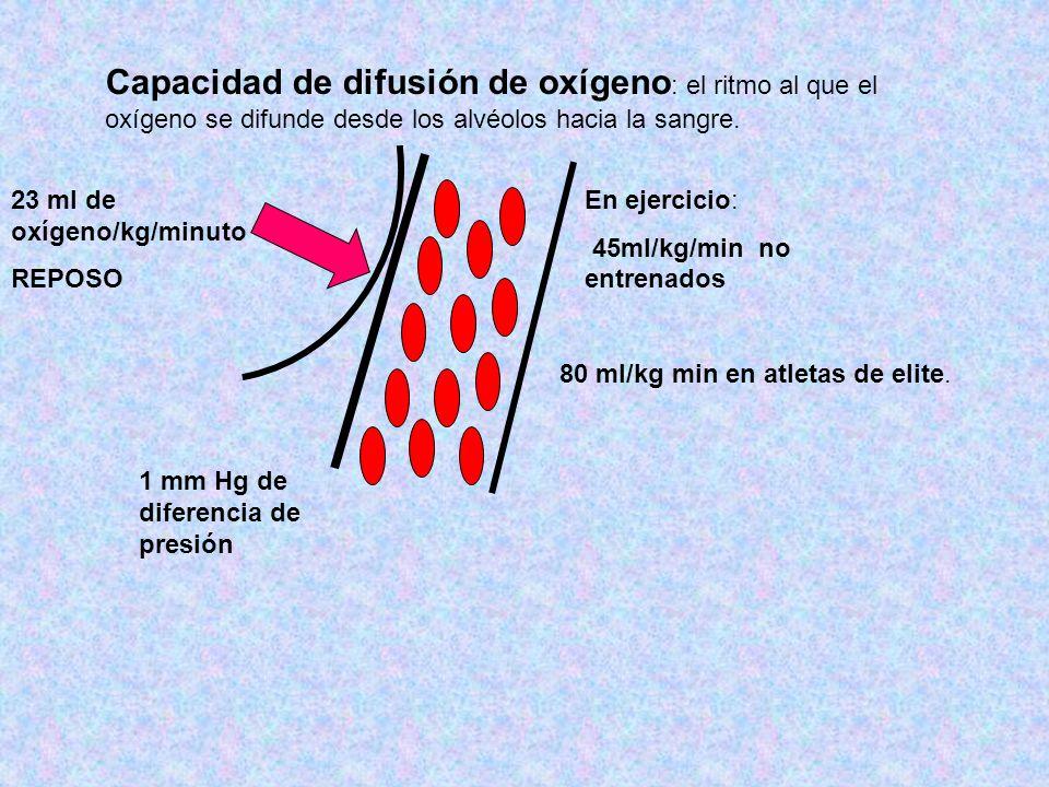 Capacidad de difusión de oxígeno: el ritmo al que el oxígeno se difunde desde los alvéolos hacia la sangre.