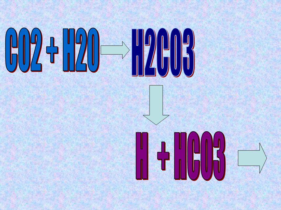 CO2 + H20 H2C03 H + HCO3
