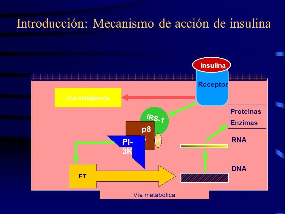 Introducción: Mecanismo de acción de insulina