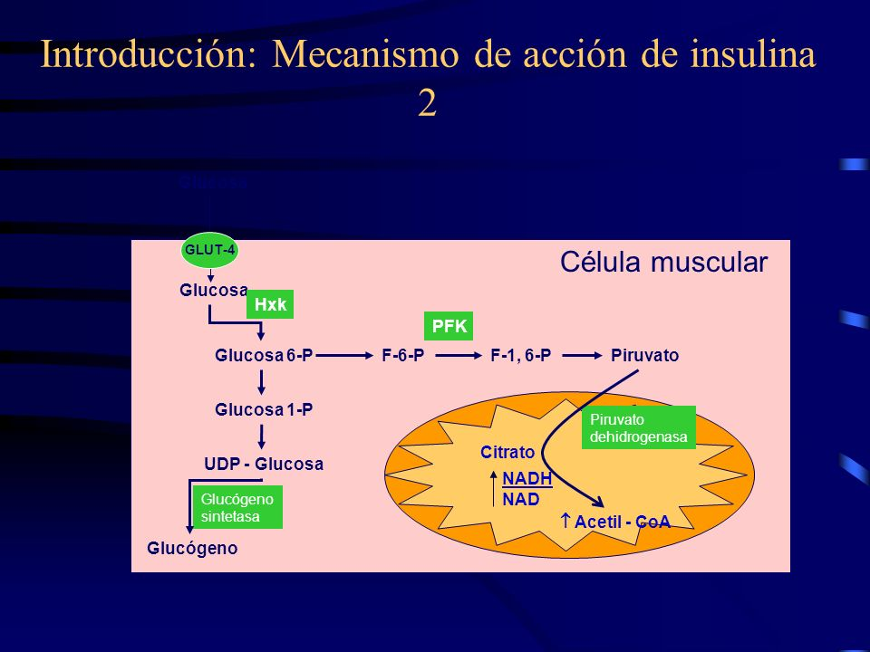 INSULINOTERAPIA. INSULINOTERAPIA DIABETES MELLITUS Es una