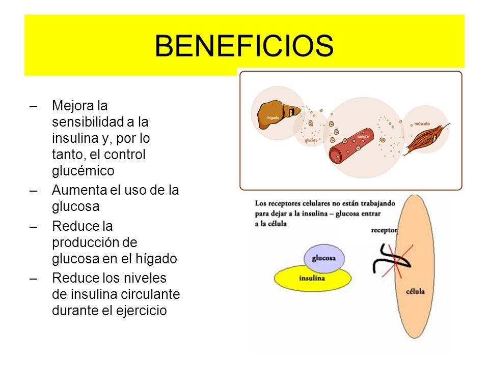 BENEFICIOS Mejora la sensibilidad a la insulina y, por lo tanto, el control glucémico. Aumenta el uso de la glucosa.