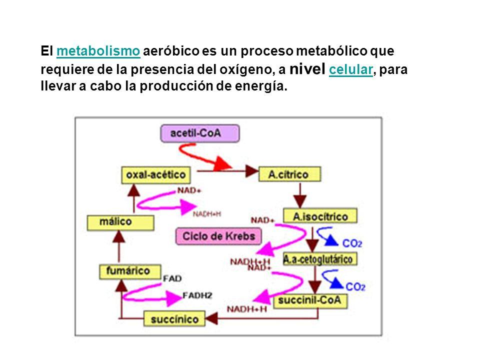 El metabolismo aeróbico es un proceso metabólico que requiere de la presencia del oxígeno, a nivel celular, para llevar a cabo la producción de energía.