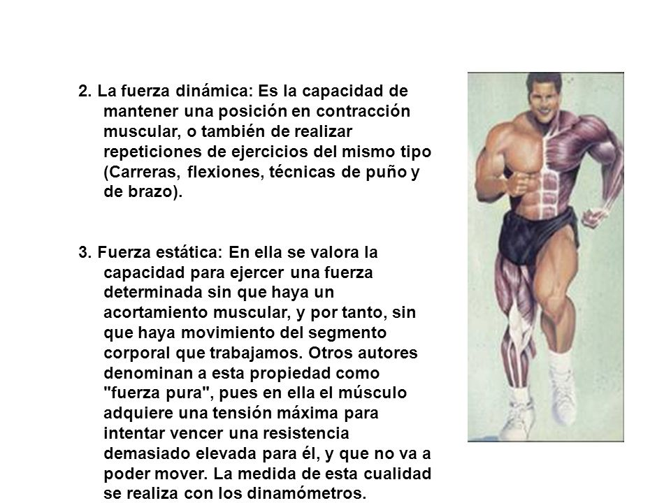 2. La fuerza dinámica: Es la capacidad de mantener una posición en contracción muscular, o también de realizar repeticiones de ejercicios del mismo tipo (Carreras, flexiones, técnicas de puño y de brazo).