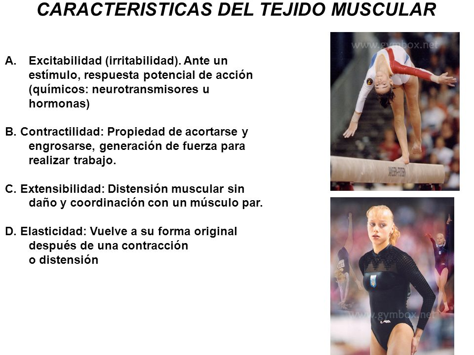 CARACTERISTICAS DEL TEJIDO MUSCULAR