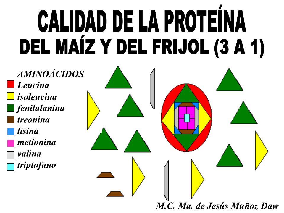 DEL MAÍZ Y DEL FRIJOL (3 A 1)