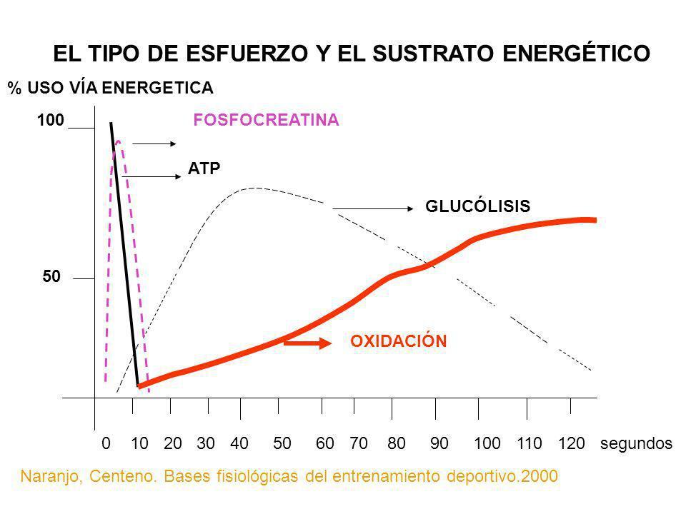 EL TIPO DE ESFUERZO Y EL SUSTRATO ENERGÉTICO