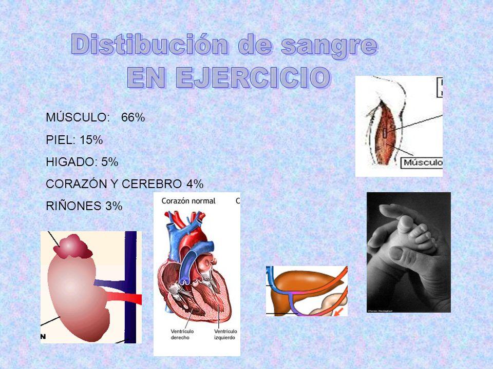Distibución de sangre EN EJERCICIO MÚSCULO: 66% PIEL: 15% HIGADO: 5%
