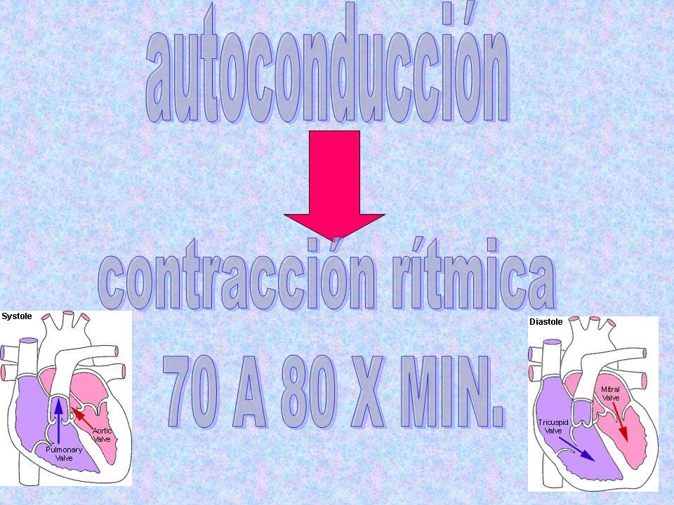 autoconducción contracción rítmica 70 A 80 X MIN.