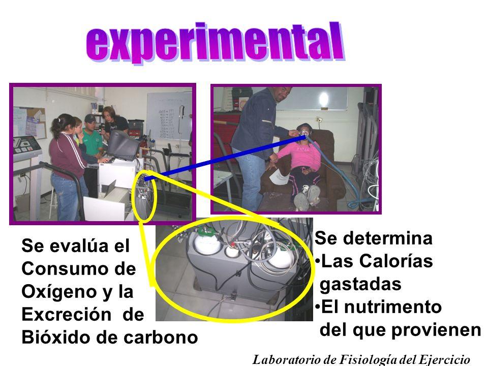 experimental Se determina Se evalúa el Las Calorías Consumo de