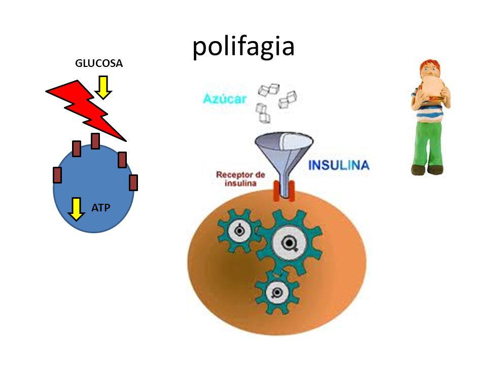 polifagia GLUCOSA ATP