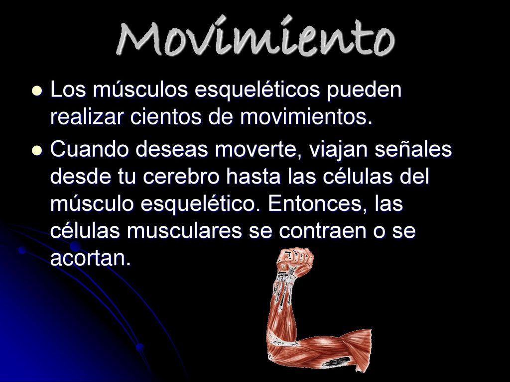 Único De Células De Músculo Esquelético Ornamento - Imágenes de ...