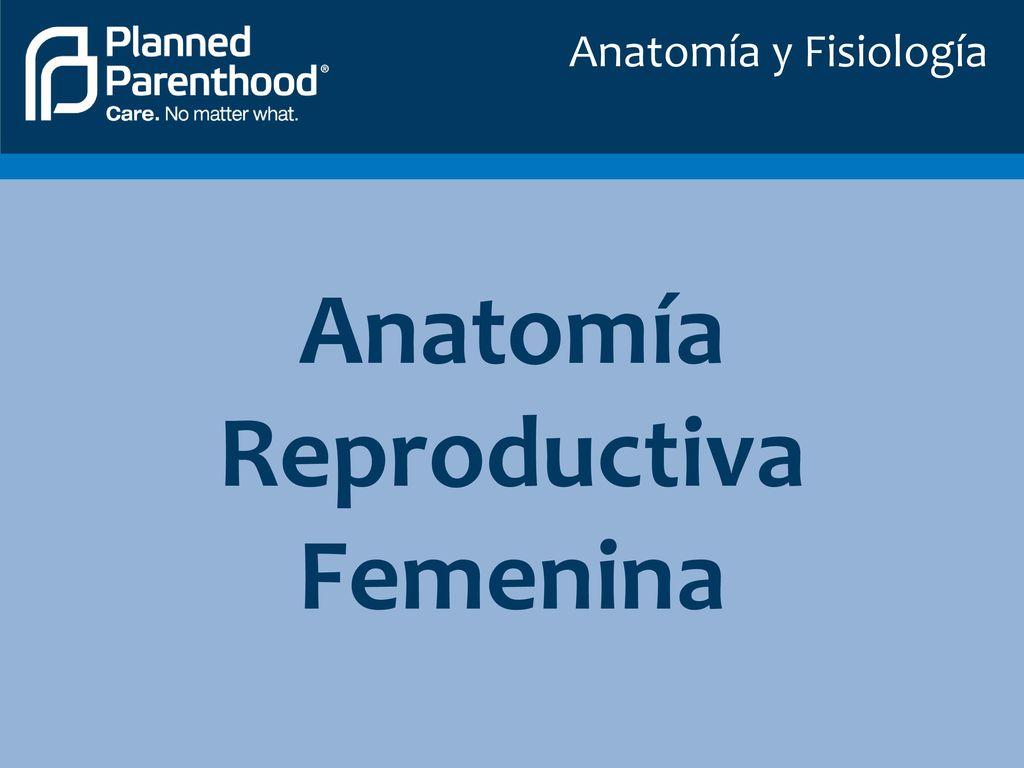Increíble Conejillo De Indias Anatomía Reproductora Festooning ...