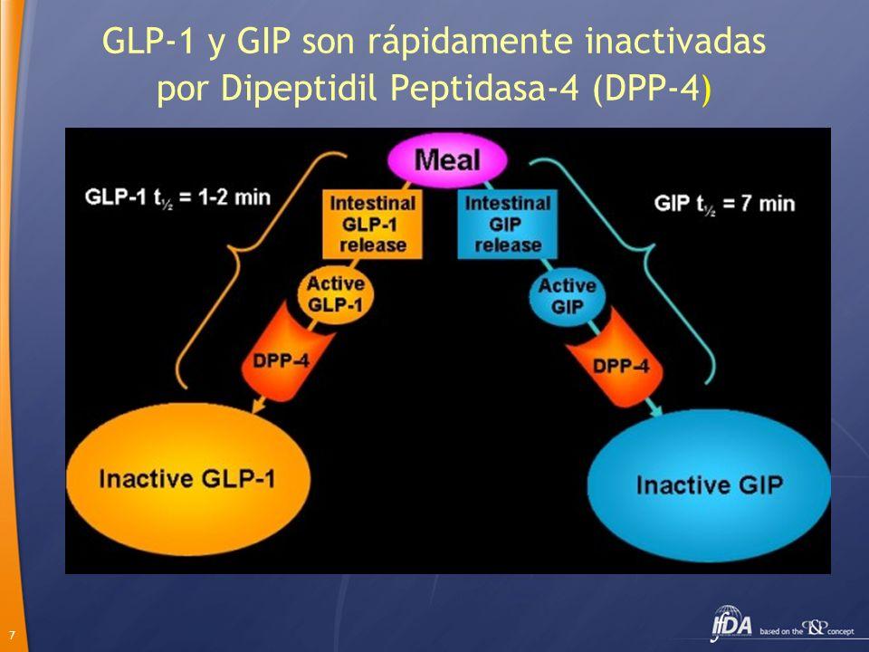 GLP-1 y GIP son rápidamente inactivadas por Dipeptidil Peptidasa-4 (DPP-4)
