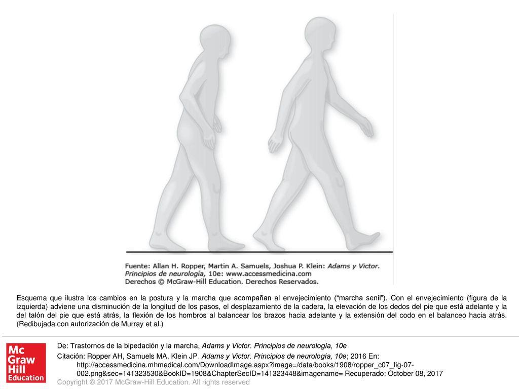 Contemporáneo Diagrama De La Anatomía Uña Ilustración - Anatomía de ...