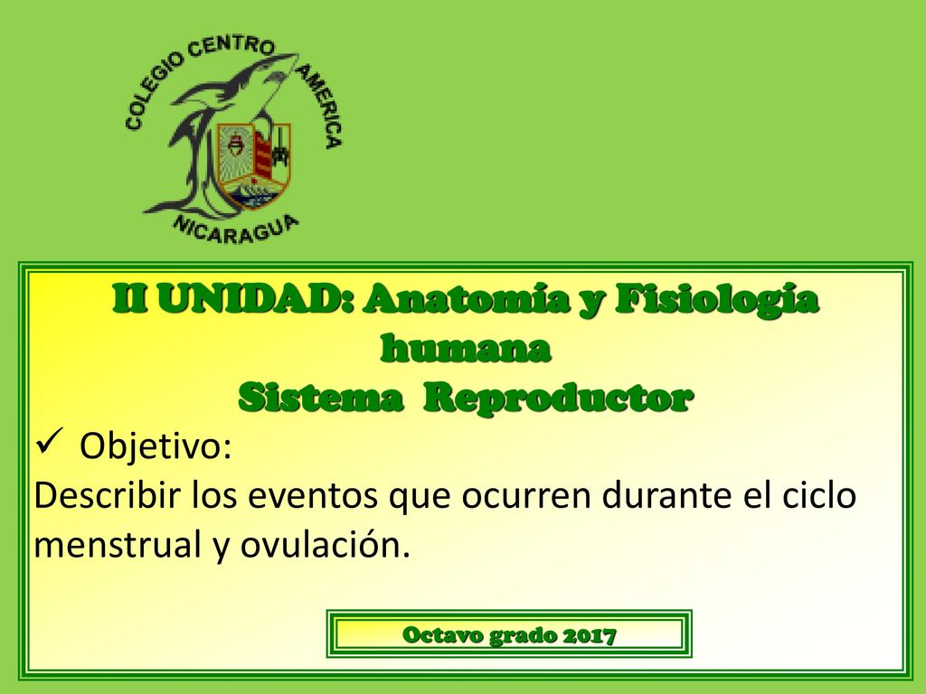 Atractivo Anatomía Del Sistema Reproductor Ejercicio 27 Respuestas ...