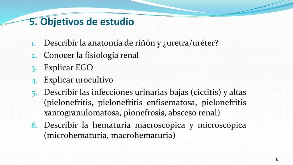 Increíble Anatomía Renal Y La Fisiología De Hoja De Cálculo ...