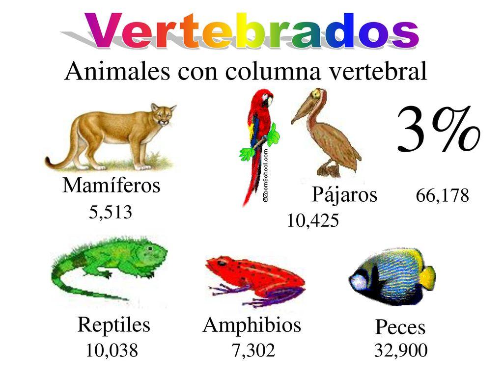 19,000 Insectos 12,000 de Honduras 140 Paises Casi todo el mundo ...