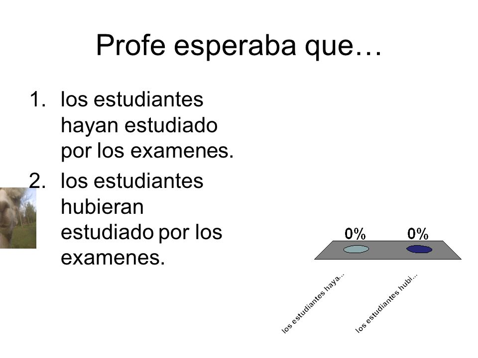Profe esperaba que… los estudiantes hayan estudiado por los examenes.
