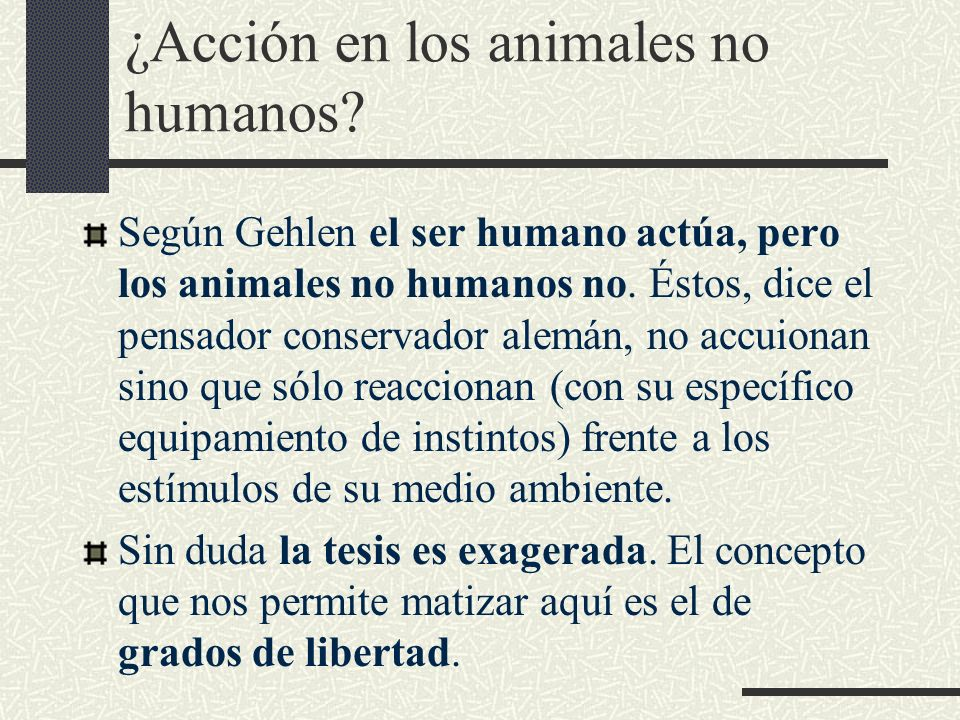 ¿Acción en los animales no humanos