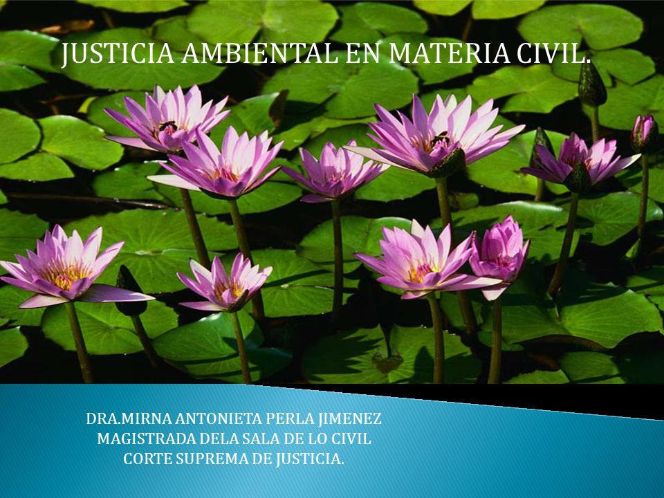 JUSTICIA AMBIENTAL EN MATERIA CIVIL.