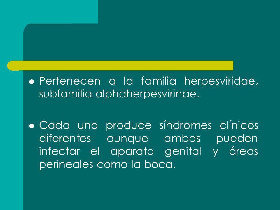 Pertenecen a la familia herpesviridae, subfamilia alphaherpesvirinae.