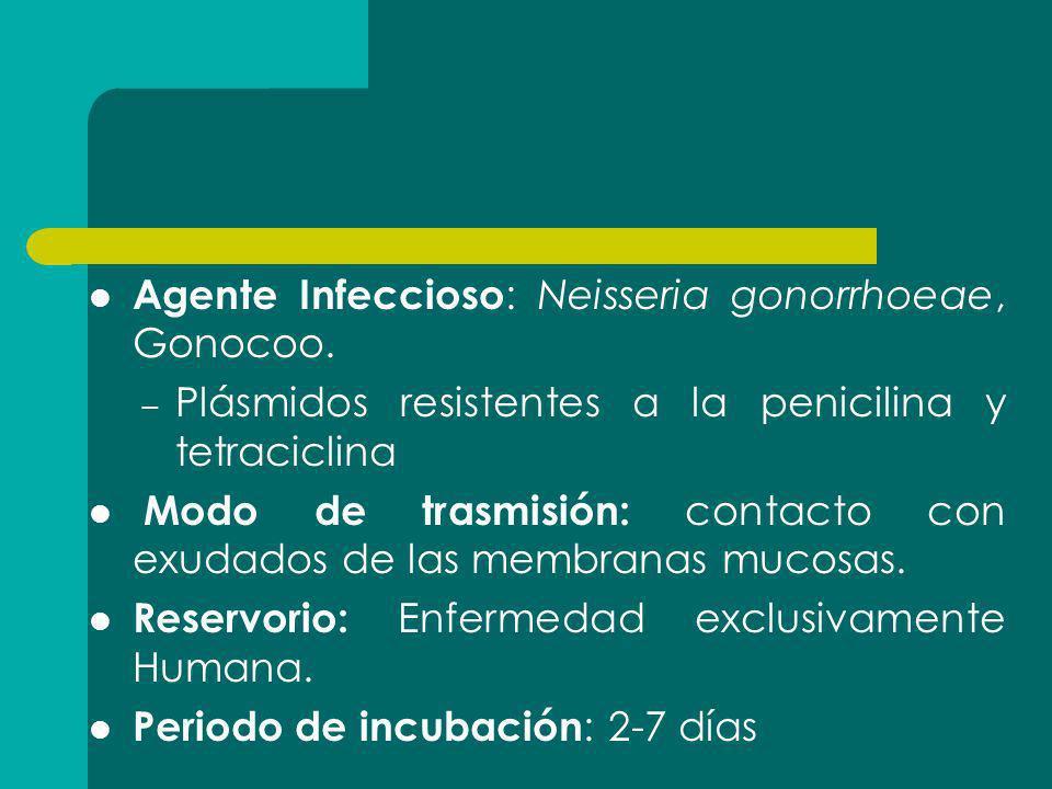 Agente Infeccioso: Neisseria gonorrhoeae, Gonocoo.