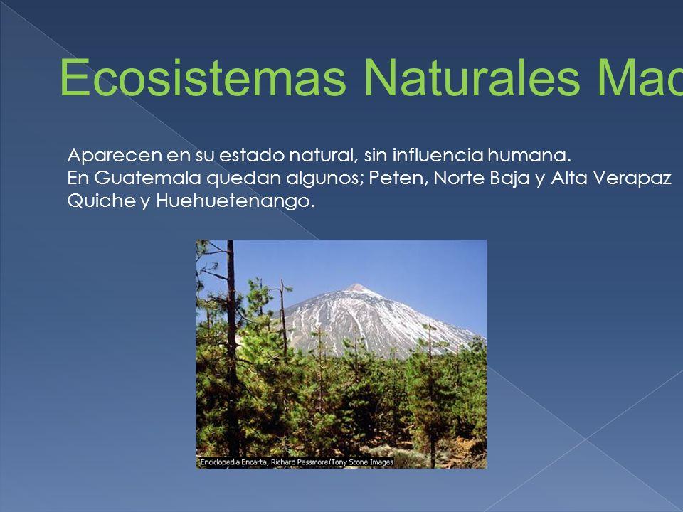 Ecosistemas Naturales Maduros