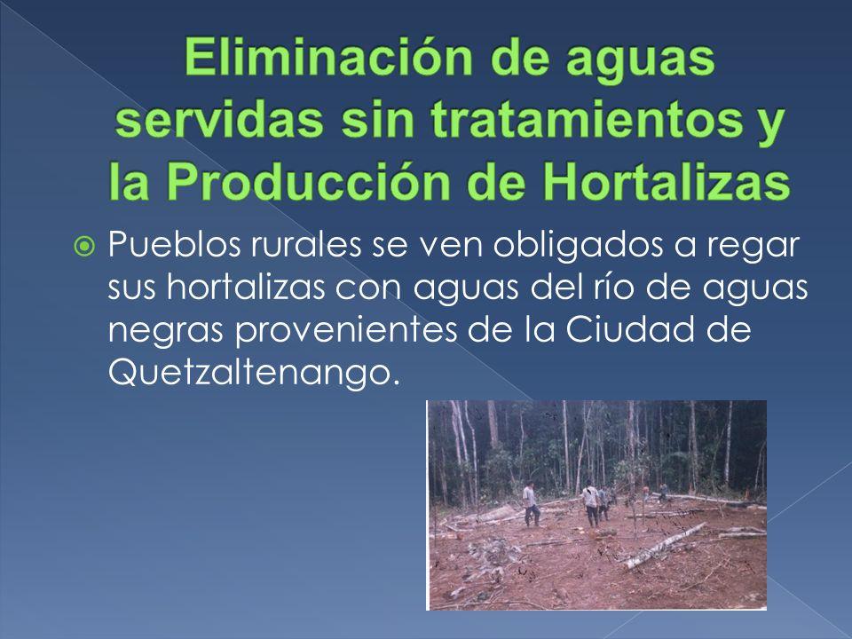 Eliminación de aguas servidas sin tratamientos y la Producción de Hortalizas