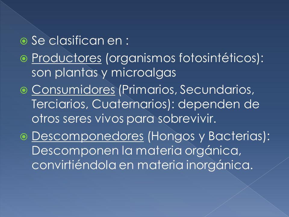 Se clasifican en :Productores (organismos fotosintéticos): son plantas y microalgas.