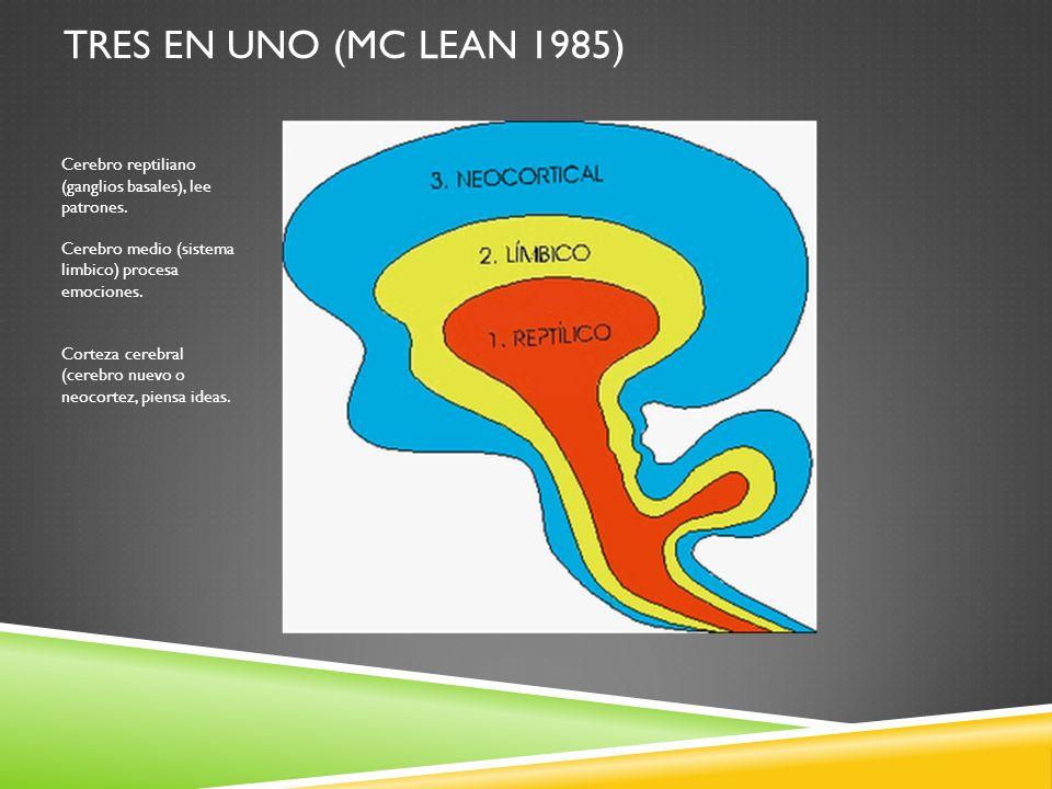 Tres en uno (Mc Lean 1985) Cerebro reptiliano (ganglios basales), lee patrones. Cerebro medio (sistema limbico) procesa emociones.