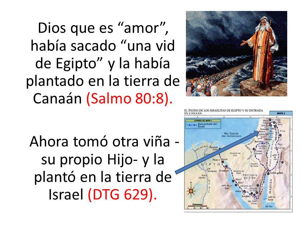 Dios que es amor , había sacado una vid de Egipto y la había plantado en la tierra de Canaán (Salmo 80:8).