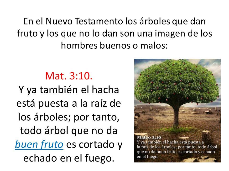 En el Nuevo Testamento los árboles que dan fruto y los que no lo dan son una imagen de los hombres buenos o malos:
