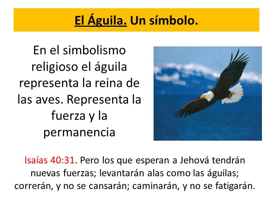 El Águila. Un símbolo. En el simbolismo religioso el águila representa la reina de las aves. Representa la fuerza y la permanencia.