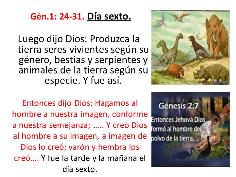 Gén.1: 24-31. Día sexto.