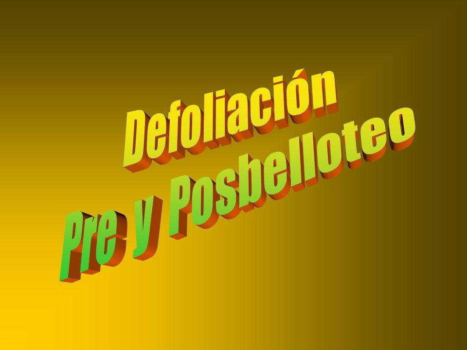 Defoliación Pre y Posbelloteo