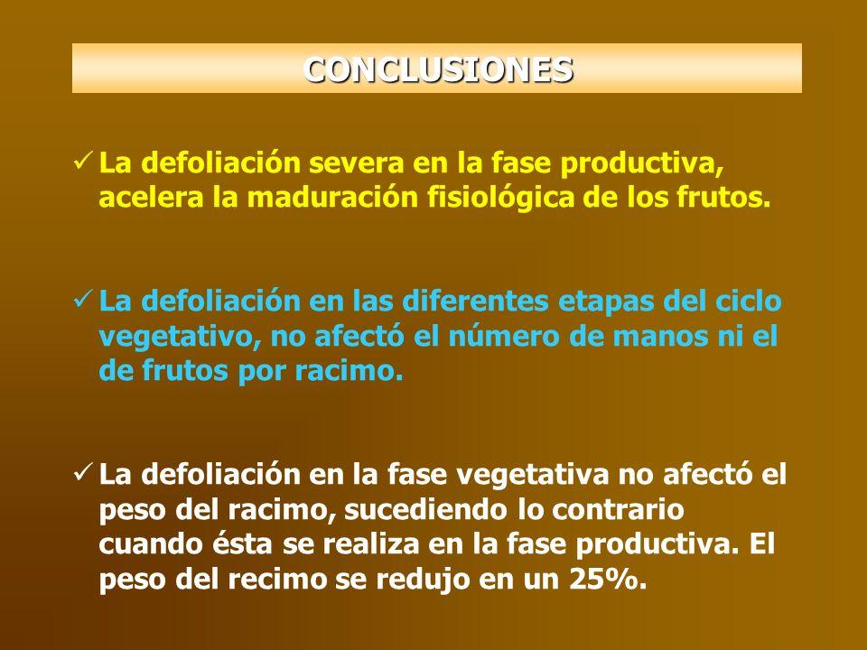 CONCLUSIONES La defoliación severa en la fase productiva, acelera la maduración fisiológica de los frutos.