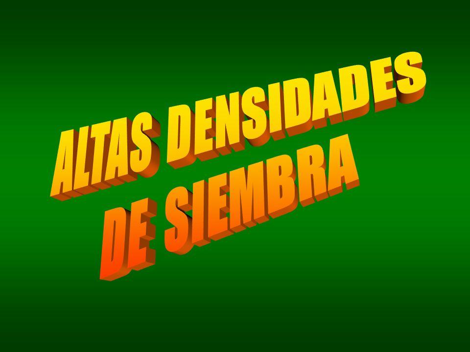 ALTAS DENSIDADES DE SIEMBRA